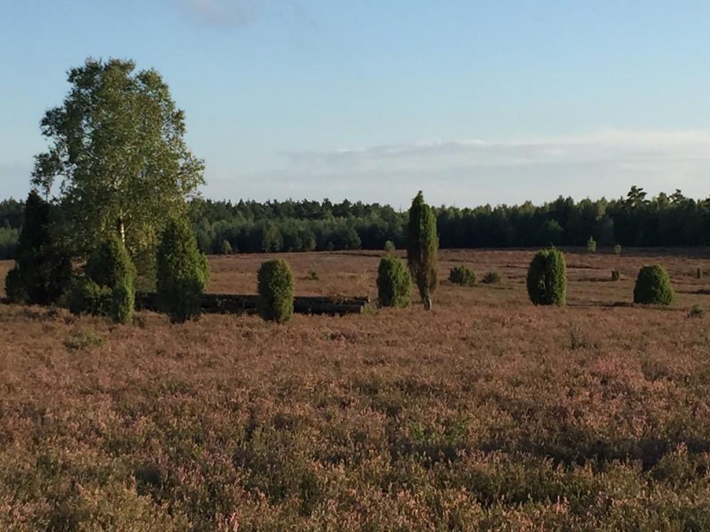Heidefläche Tiefental